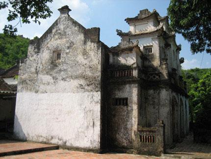 Thanh Hóa: Phát hiện hai cây đèn khổng lồ 1000 năm tuổi