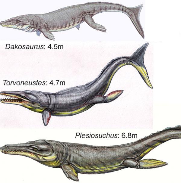 Cá sấu khổng lồ thống trị đại dương cổ đại