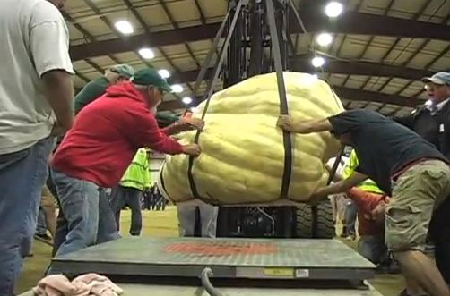 Video: Cân quả bí ngô nặng nhất thế giới