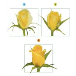 Phương pháp bảo quản hoa tươi lâu sau thu hoạch