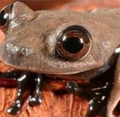Phát hiện 60 loài sinh vật mới