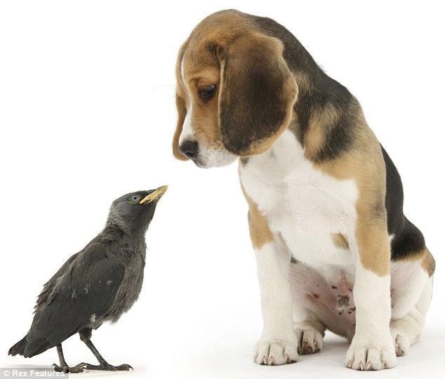 Những bức hình ngộ nghĩnh về phút vui đùa của động vật