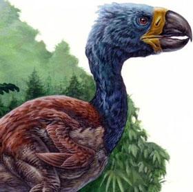 Chim khổng lồ DIatryma không phải là loài ăn thịt