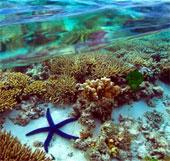 Australia nỗ lực bảo vệ rạn san hô lớn nhất thế giới