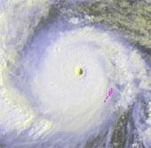 Video: Cây cối ngả nghiêng trong bão Haiyan