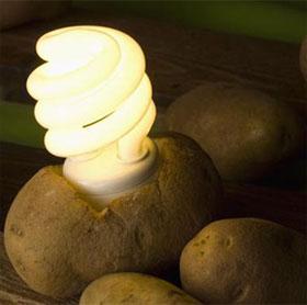 Thắp sáng đèn led bằng khoai tây