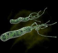 Vi khuẩn loét H. pylori có thể ngăn bệnh tiêu chảy