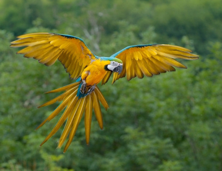 Những hình ảnh sống động về thế giới của loài chim (2)