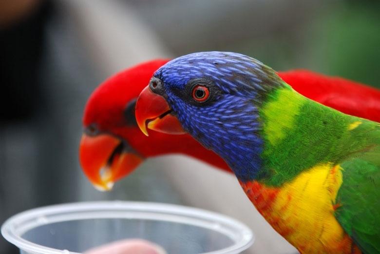 Những hình ảnh sống động về thế giới của loài chim