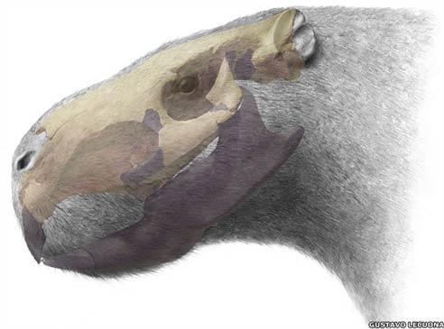 Phát hiện hóa thạch chuột khổng lồ
