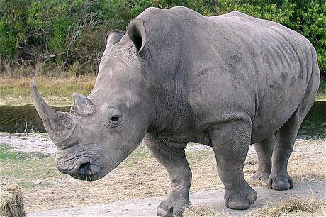 Khám phá thế giới của các loài tê giác