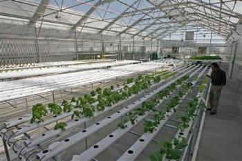 Thủy canh - giải pháp lý tưởng cho nông nghiệp đô thị