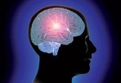 Phát hiện gien điều chỉnh quá trình lão hóa não
