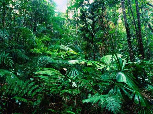 Rừng mưa nhiệt đới trên thế giới đang hồi sinh