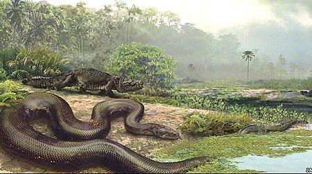 Loài rắn dài bằng một chiếc xe buýt