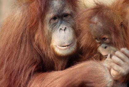 """10 """"bà mẹ"""" tuyệt vời trong thế giới động vật"""