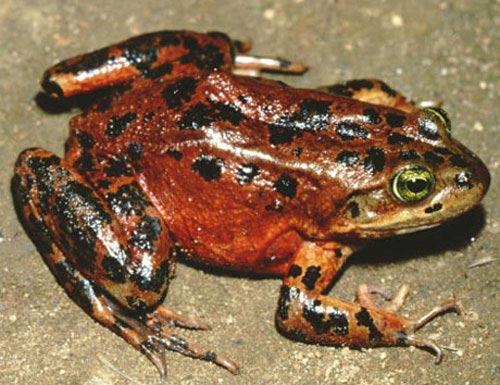 Top 8 loài động thực vật quý hiếm và bị đe dọa