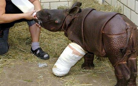 Bệnh viện cho những con vật bị thương