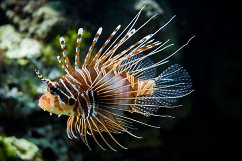 10 loài sinh vật biển đáng sợ nhất