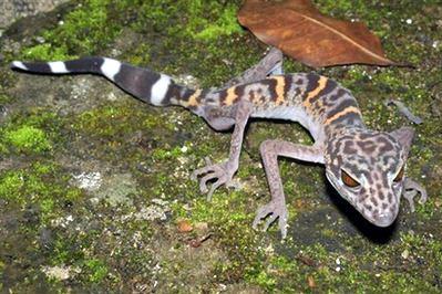 Phát hiện 163 loài mới tại khu vực sông Mekong