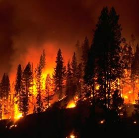 Xe chữa cháy rừng thế hệ mới