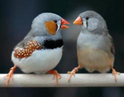 Chim cũng thích 'môn đăng hộ đối'