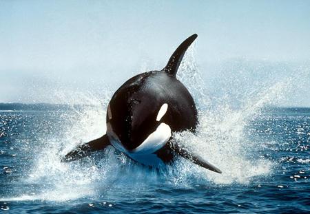 10 sát thủ đáng sợ nhất đại dương