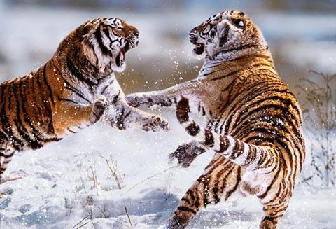 Cuộc chiến sinh tồn của động vật