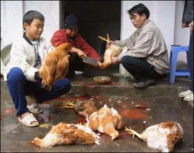 100% người nhiễm H5N1 năm 2009 tử vong