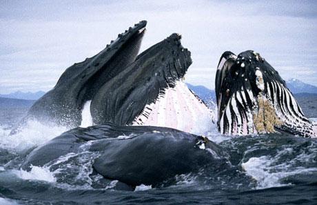 Đối mặt với cá voi khổng lồ