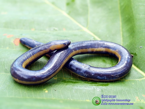 Những loài động vật kỳ lạ ở Việt Nam