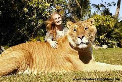 Hổ - sư tử: 'Anh hùng nhất khoảnh'