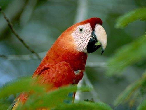 Ảnh đẹp rừng mưa nhiệt đới