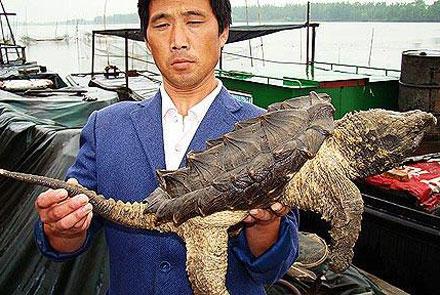 Phát hiện sinh vật lạ ở Trung Quốc