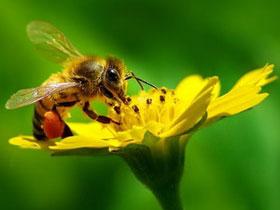 Thực vật không kết trái vì thiếu côn trùng thụ phấn