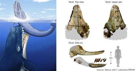 Thủy quái Leviathan không còn là huyền thoại