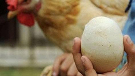Phát hiện quả trứng nguyên vẹn sau cả nghìn năm