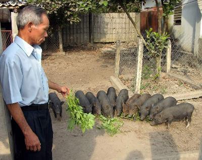 Kỹ thuật nuôi heo rừng thuần chủng