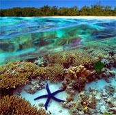 Rạn san hô lớn nhất thế giới sẽ không rơi vào nguy hiểm