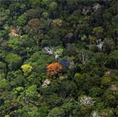 Hạn hán, cháy rừng biến Amazon thành nguồn phát thải carbon