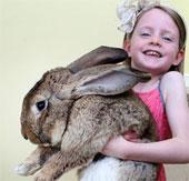 Chú thỏ khổng lồ ăn 4000 củ cà rốt trong một năm