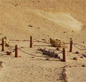 Viếng thung lũng cá voi hóa thạch ở Ai Cập