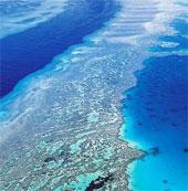 UNESCO cảnh báo rạn san hô Great Barrier Reef lâm nguy