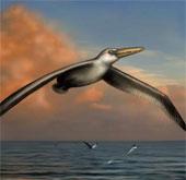 Phát hiện hóa thạch của loài chim lớn nhất mọi thời đại