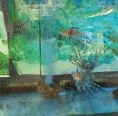 Bộ ảnh về các loài cá ở Thủy Cung  - Nha Trang