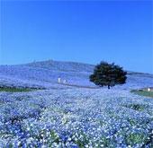 11 kỳ quan thiên nhiên có vẻ đẹp siêu thực