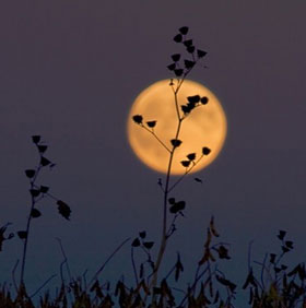 """Đón xem hiện tượng """"Trăng thu hoạch và siêu Mặt trăng"""" tối nay"""