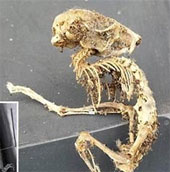 Phát hiện bộ xương quái thú dị thường