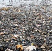 1,5 triệu động vật trên đại dương chết vì rác nhựa mỗi năm