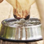 Chó và mèo uống nước khác nhau